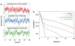 """Spatial scales of population synchrony in predator-prey systems"""