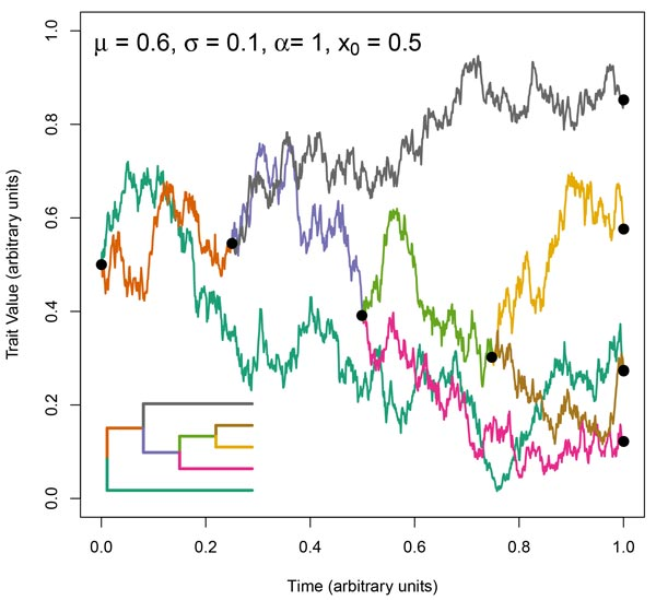 Simulated evolution of a Beta-distributed trait along a phylogenetic tree with 5 species.<br />(Credit: Simone P. Blomberg)