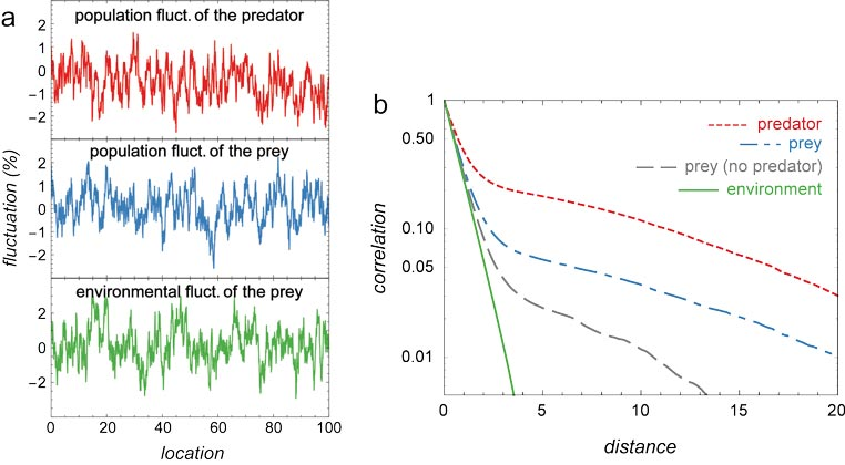 <i>a</i>, 1D environmental fluctuations affecting the prey population dynamics (green), population fluctuations of the prey (blue) and of the predator (red). Environmental fluctuations affecting the predator are assumed to be negligible. <i>b</i>, Spatial autocorrelation functions of the environmental fluctuations affecting the prey (green solid line), the population fluctuations of the prey in the absence of the predator (grey dashed lines), and the population fluctuations of the prey (blue dot-dashed line) and of the predator (red dotted line) provided both species are present. <br />(Credit: Jarillo et al., &copy;&nbsp;2020&nbsp;The&nbsp;University of Chicago)